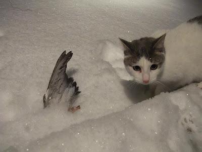 cat brought a dead bird to door, tried to bring inside, bird wing