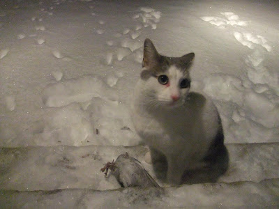 cat caught a pigeon, pigeon wing, winter