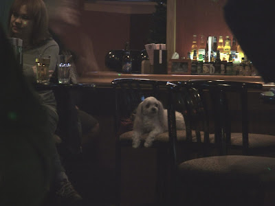 i saw this at a bar the other day, a little white dog drinking at a bar