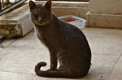 Scaredy Cat Tom Thorne Pdf Free