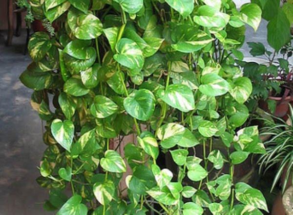 Indoor And Outdoor Plants Variety