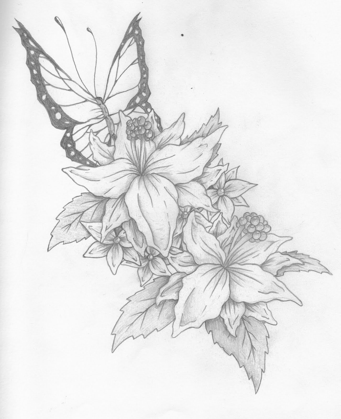 butterfly and flower drawings