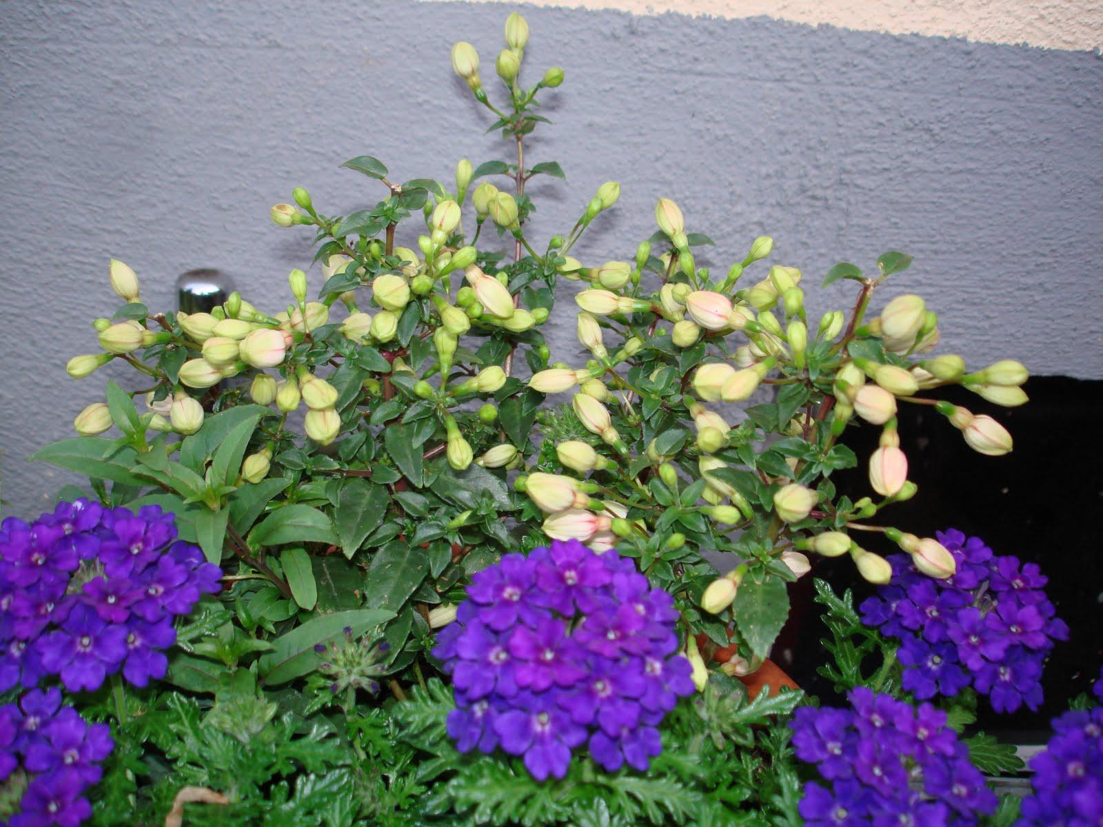 Cvijeće u saksijama  Cvjetna Oaza - Sve o cvijecu
