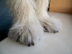 The abominable snowman feet???