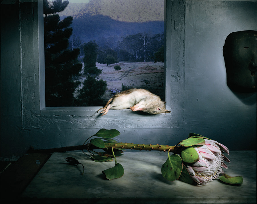 marian drew artist essay Marian drew quoll with flowers and forest 2005 from the series australiana still life archival pigment print on hahnemuhle paper 90 x 110 cm courtesy of the artist.