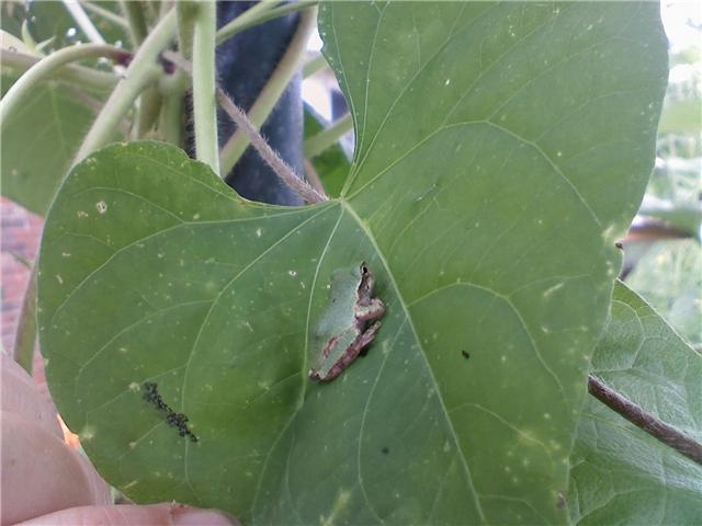 [frog+on+leaf.aspx]