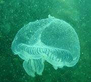 ---e a medusa..