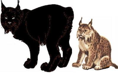 black singles in lynx Men right handed stiff steel lynx black cat single iron 2 iron  lynx black cat tour steel shaft iron set stiff  nice lynx golf black cat 17 single 2 hybrid .