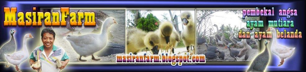 MasiranFarm - angsa, ayam mutiara & ayam belanda