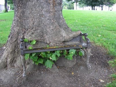 22 Trees Growing Around Objects Now That S Nifty