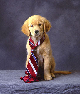 How To Make Neckties For Dogs