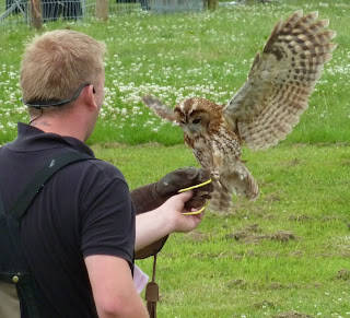 Owl flight demonstration