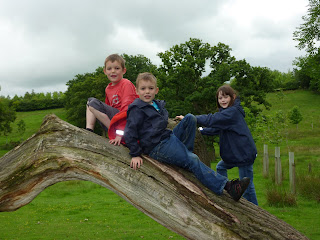 Rob, Chris and Hol climbing a dead tree