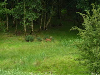Spot the Roe Deer