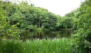 Calder Vale Mill Pond