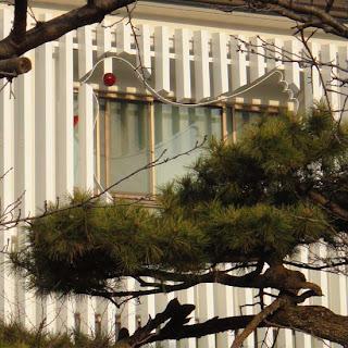 松の木にとまる鳩