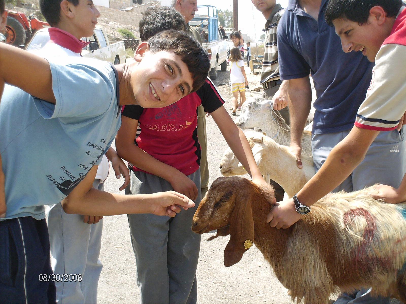 [AlMazar_Goats_109[1]]