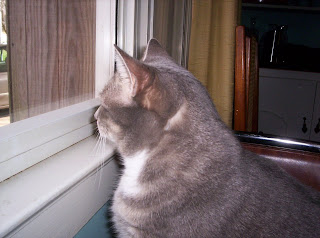 Gwen birdwatching