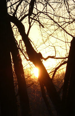 sun on branches