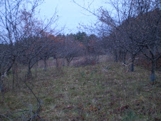 The orchard during rejuvenation