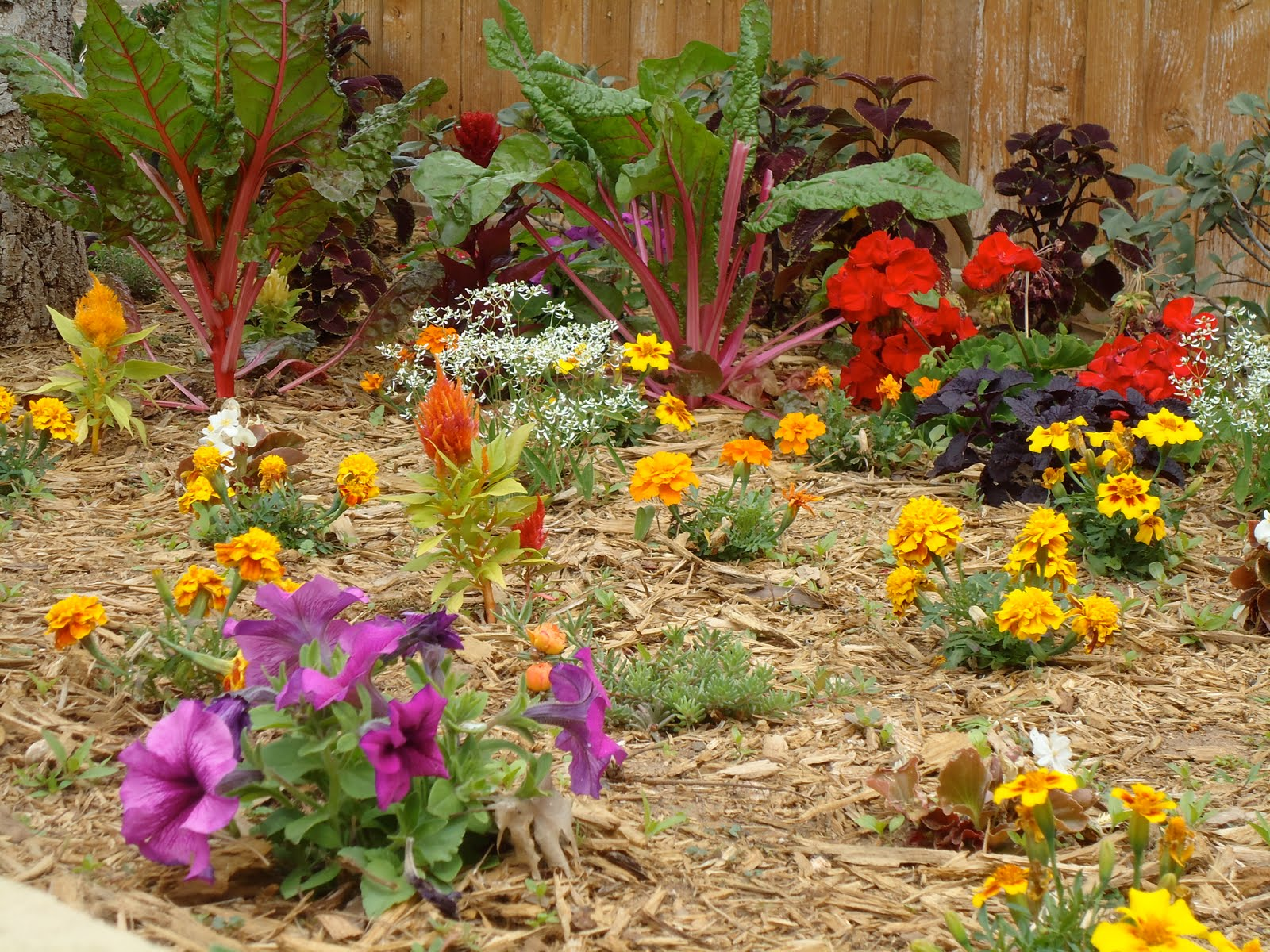 Cc designs front yard flowerbed for Large flower bed design ideas
