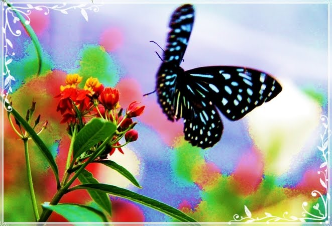 Butterfly flying away - photo#22