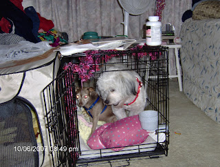 Jake and Nisie in a Cage Fight