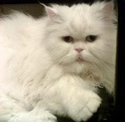 Mi gato Liborio ahora se llama Jack, porque es... histriónico, pero... ¡histriónico! y dice: