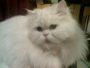 Mi amigo Liborio, no es un amigo sensible, pero es mi gato fiel