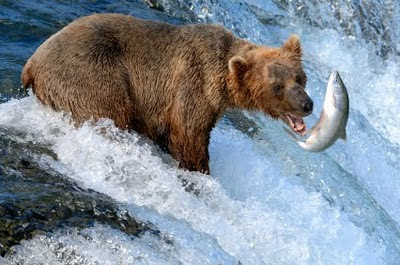 Katmai National Park,