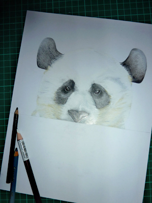 of a baby panda coloured pencil white chalk pencil and charcoal pencil    Panda Drawing In Pencil