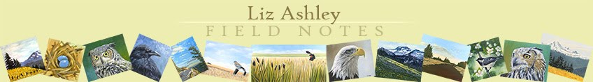Liz Ashley :: Field Notes