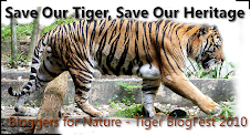 Join The Tiger Blogfest