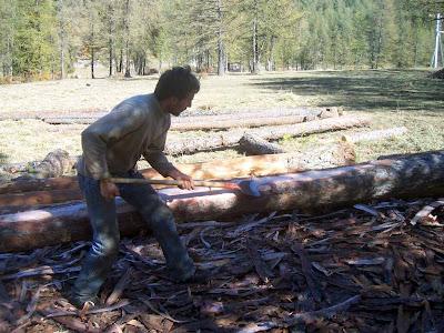 Fuste : écorçage manuel du tronc.