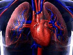 Coração de Silicone
