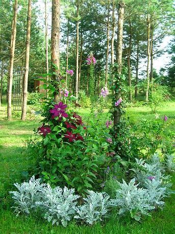 Nasz ogród: