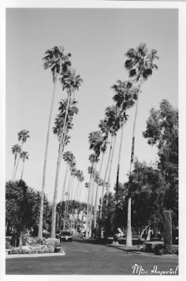 Hollywood Forever, Los Angeles, CA, 25-Mar-05