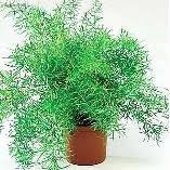 أنواع نباتات الظل اختاري مايناسب ذوقك ط§ط³ط¨ط±ط¬ط³.JPG