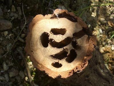 クワガタの巣