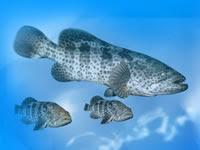 Fish farming international