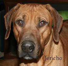 Kushinda's Jericho 18mts