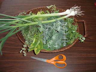 herb harvest: marjoram, variegated sage, greek spicy oregano, variegated oregano