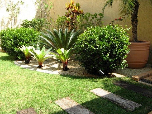 imagens paisagismo jardins:Palmeira solitária, de grande interesse para o paisagismo