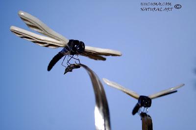 escultura insectos odonatos