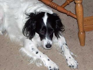 Bella finally slumped down on the floor, so dejected.