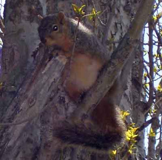 Another view of one of the neighborhood squirrels.