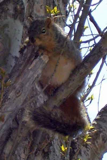 Squirrel inquisitiveness.