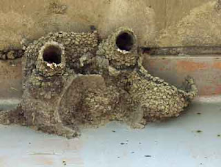 bird nests under a bridge ledge