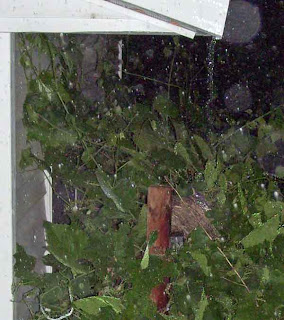 Robin's nest being rained on.