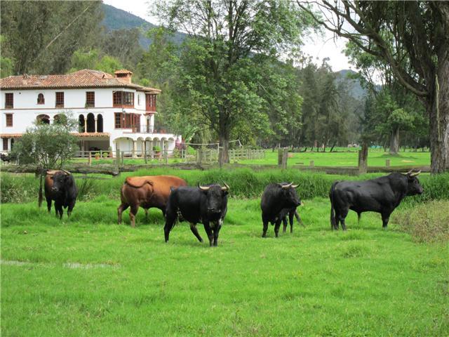 Música de la región de Cajamarca A1